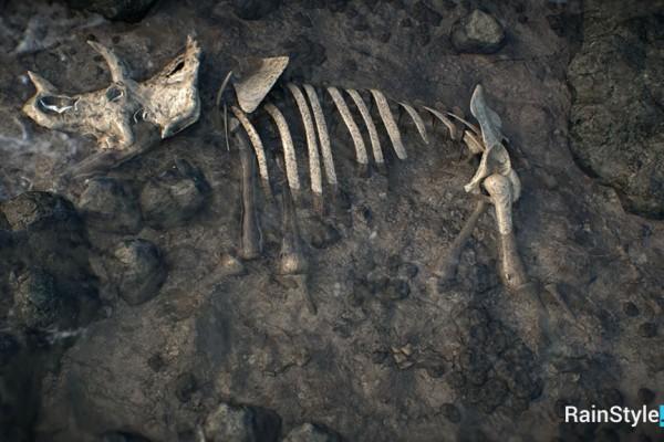 Кости трицератопса в реке.